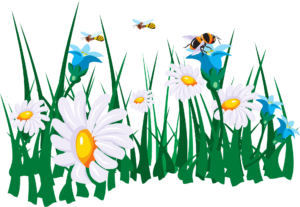 flowers-45786